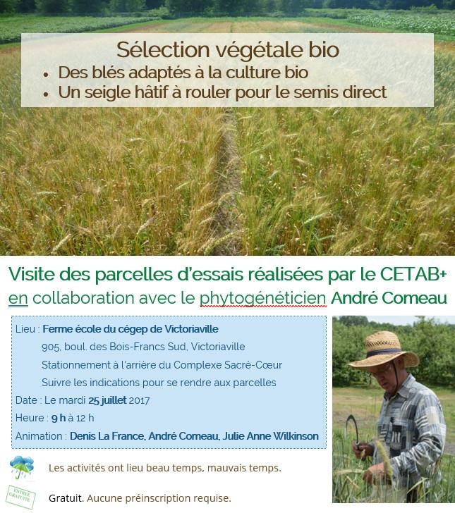 Sélection végétale bio - des blés adaptés à la culture bio - un seigle hâtif à rouler pour le semis direct